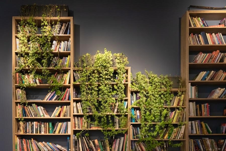 bookshelf plants