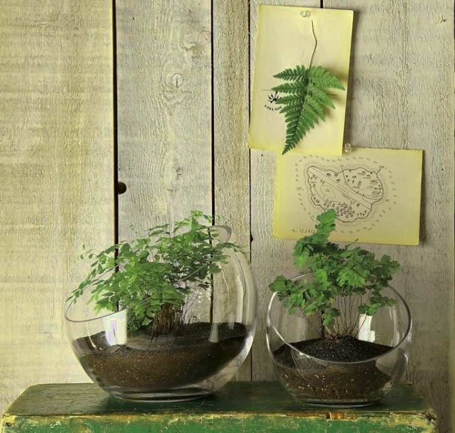 Glass Bowl Plants