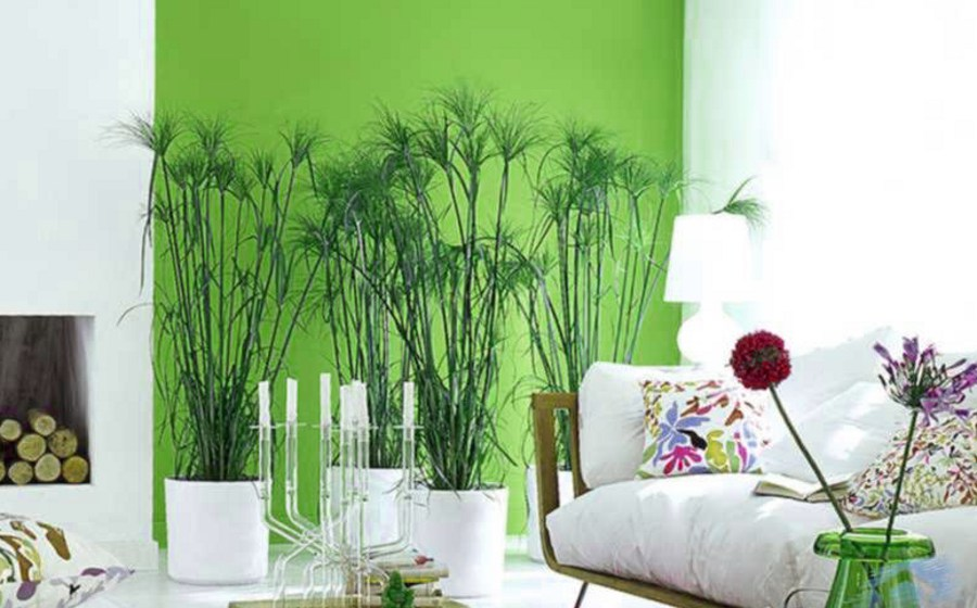 Room Decor with Greenery