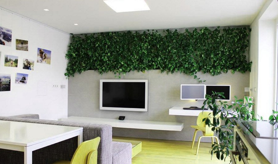 Wall Decor with Plants