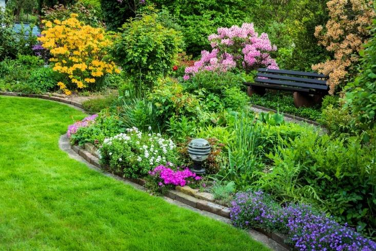 Water Garden : A Basic | Home Improvement Tips