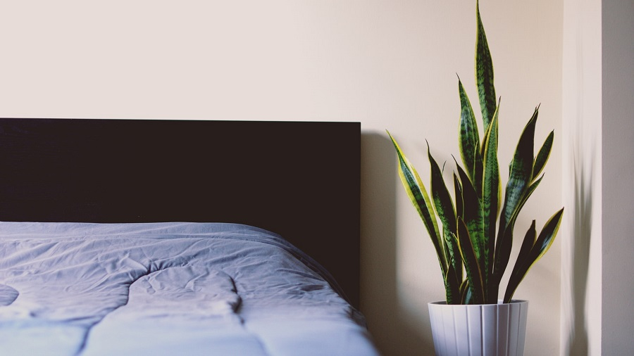 bedroom greenery