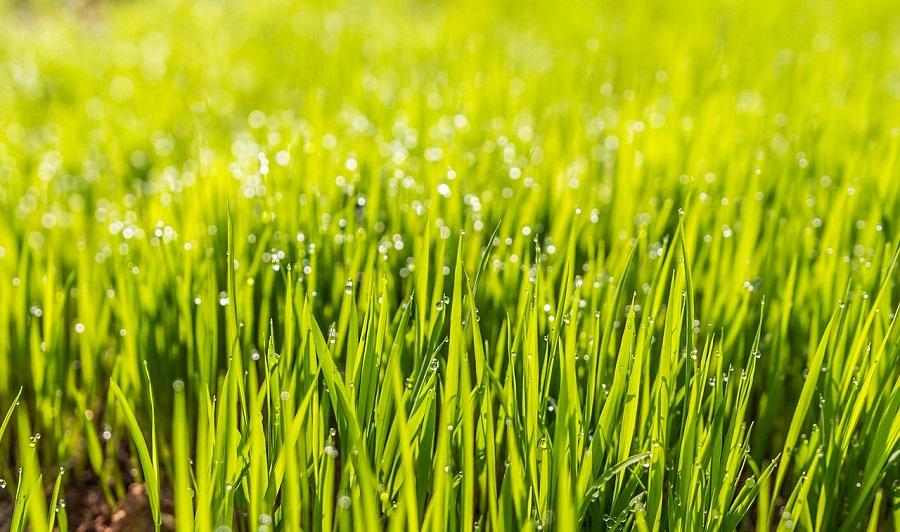 fertile lawn