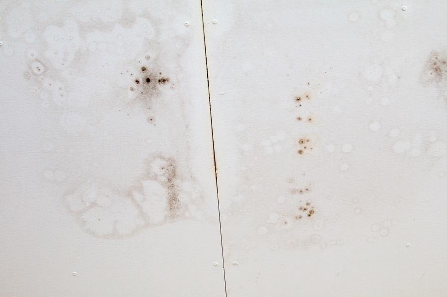 mildew damage