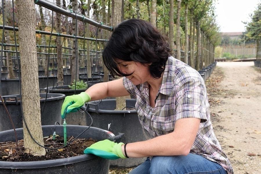 root irrigation