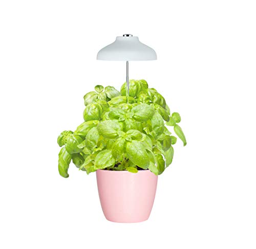 automatic grow light