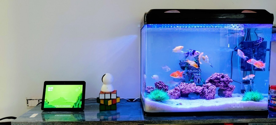 covered fish tank